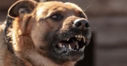Dog Attack Injury Solicitor Ireland